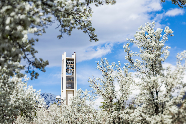 The BYU bell tower framed by white blossoming trees.