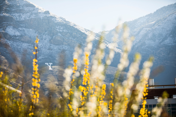 Y Mountain behind yellow flowers.