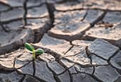 Young seedling growing in dry, cracked ground.