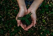 Hands hold soil and a budding plant