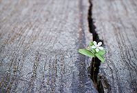 A small flower pushes itself through a crack in a stone