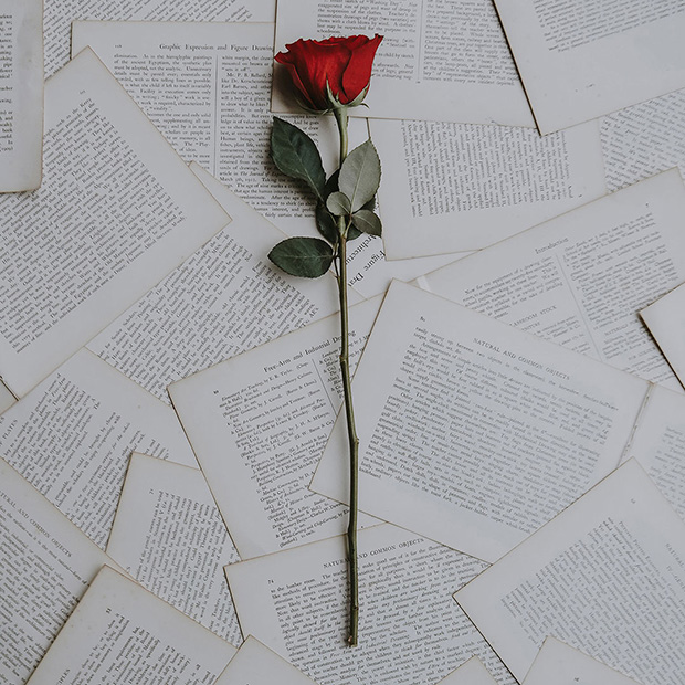 A single red rose placed upon scattered book pages.