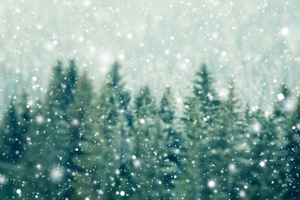 Snow falling over green pine trees.
