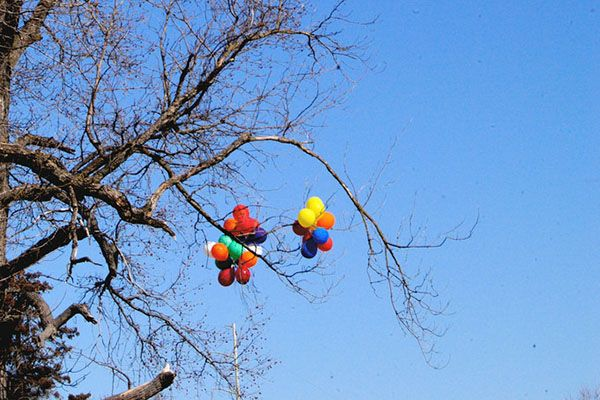 Balloons stuck in a tree branch