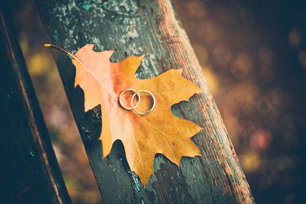 Two wedding rings on top of an autumn leaf