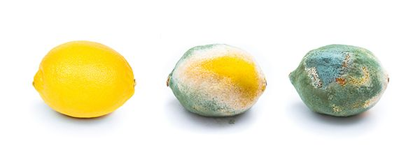 3 Stages of a Lemon Rotting